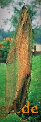 Hirsch Fliegenschutz